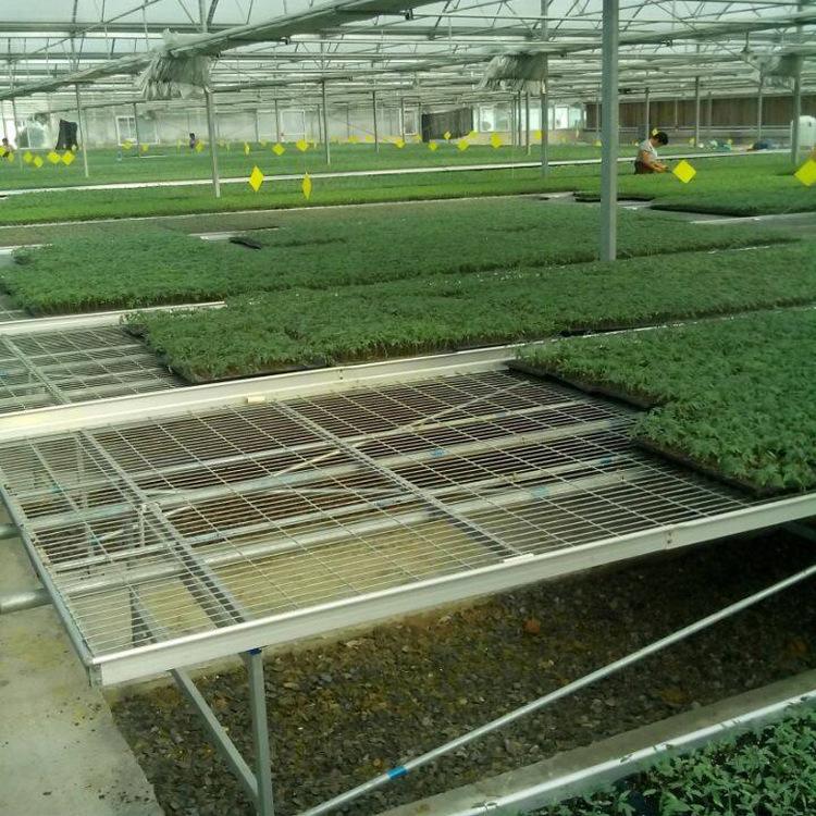 煌城温室育苗系统 苗床架 育苗温室大棚苗床设备